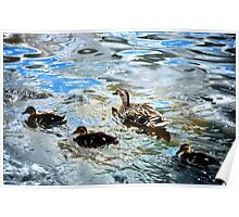Mother Duck and Ducklings Poster