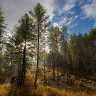 Our Montana Backyard by Kerri Gallagher