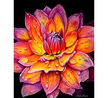 Dew Drop Dahlia Photographic Print