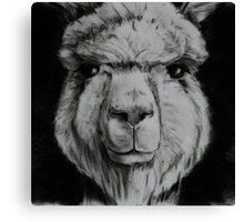Alpaca in black and white Canvas Print