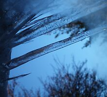 The Coldest Winter in a Hundred Years by anorangebus