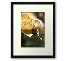 She Dreams of growing up Framed Print