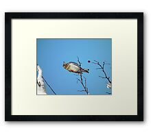 A Song for Winter Framed Print