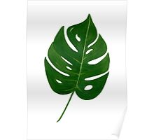 Leaf Print - 2 Poster