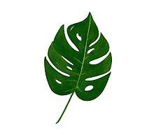 Leaf Print - 2 Photographic Print