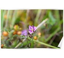 Twining Fringe-lily (Thysanotus patersonii) Poster