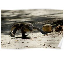 Juvenile Komodo Dragon ~ Rinca Island Poster