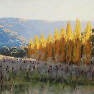 Afternoon Light Tarana by Graham Gercken