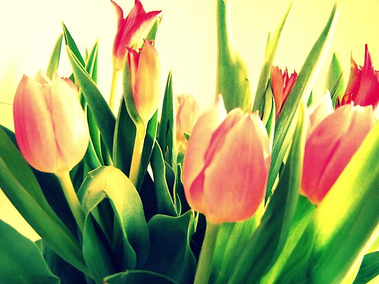 Tulips No. 10 by Friederike Alexander