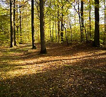forest path in the light of autumn.  by hpostant