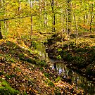 little creek running in the forest in autumn  by hpostant