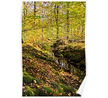 little creek running in the forest in autumn  Poster