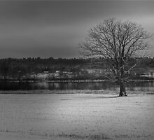 Lone Tree by Jamie Cameron
