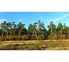 Tree Line Photographic Print