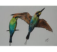Rainbow Bee Eater - inktense Photographic Print