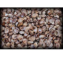 Walking On Seashells Photographic Print