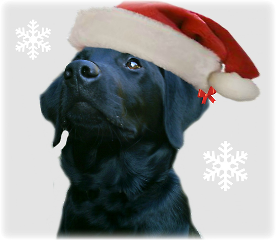 Santa Dog by vic321