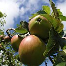 Apples by Richard Ion