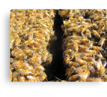 Bees In Colour Canvas Print