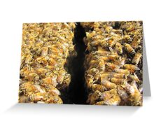 Bees In Colour Greeting Card