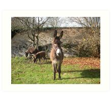 Donkey on Guard Art Print