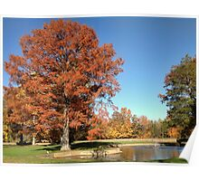 Bald Cypress Tree with Autumn color Poster