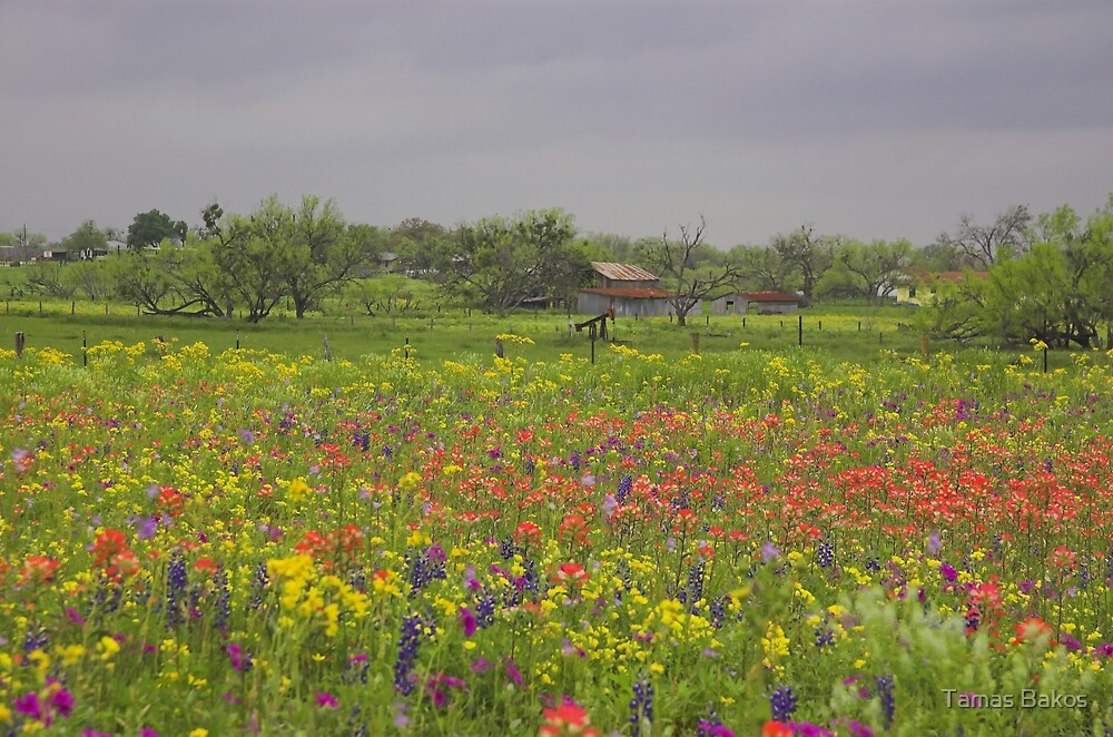 Springtime in Texas by Tamas Bakos