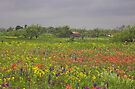 Springtime in Texas by Tamas Bakos