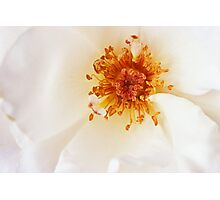 Soft White Photographic Print