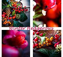 Winter Hedgerows by Andrew Robinson