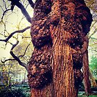 Madison Square Park Tree  by SylviaS