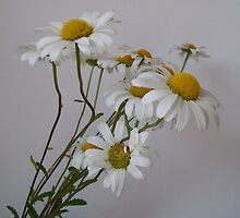Wistful White Daisies by Shelovescandy
