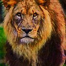 Lion, Rex by Chris Lord