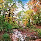 Autumn at Hopkins Pond by John Rivera
