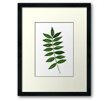 Leaf Print - 4 Framed Print