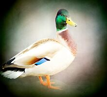 Mallard by KBritt
