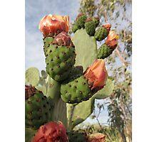 Cactus Bright Orange Flower Buds Photographic Print