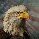 Bald Eagle and American Flag by swaby