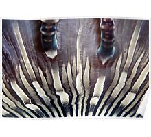 Zebra Anemone Poster
