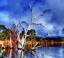 Dead Tree In Lake Eildon by djzontheball