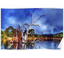 Dead Tree In Lake Eildon Poster