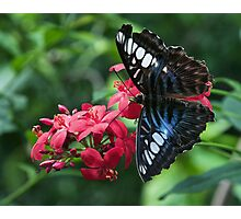Butterfly On Red Flower Photographic Print