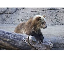 Grizzly Cub Photographic Print