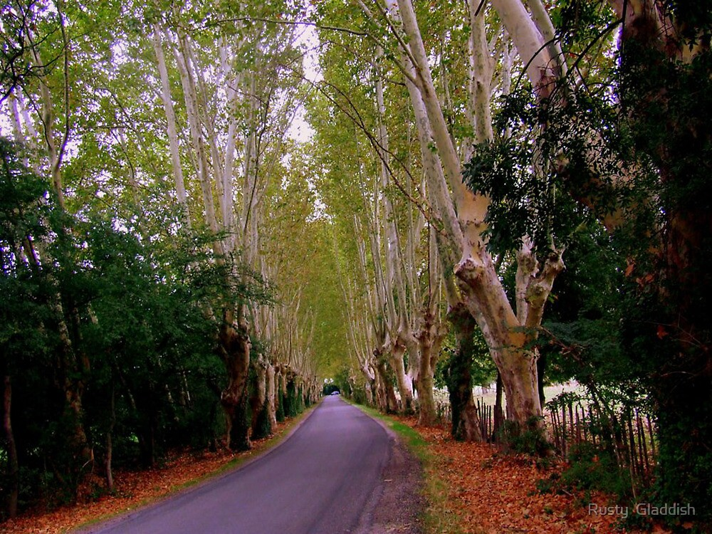 The Road to St Remy de Provence by Rusty  Gladdish