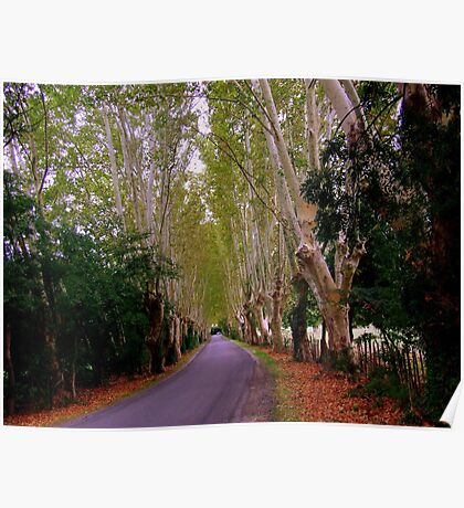The Road to St Remy de Provence Poster
