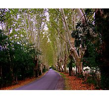 The Road to St Remy de Provence Photographic Print