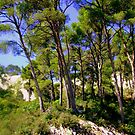 Giant Pines on Les Alpilles by Rusty  Gladdish