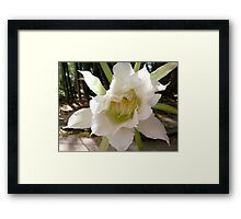 White Torch Flower Framed Print