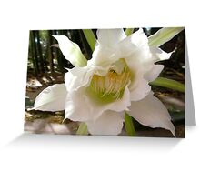 White Torch Flower Greeting Card