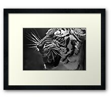 Bengal Tiger in B&W Framed Print